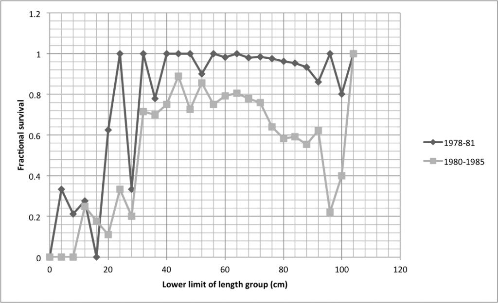 Larger T. gigas survived from 1978-1981 than did from 1980-1985. Data from Pearson and Munro (1991)